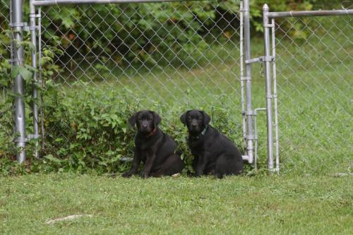 pups_july12 (5)