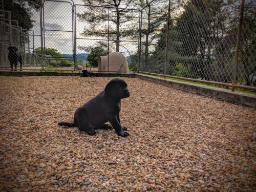 Pondering puppy life