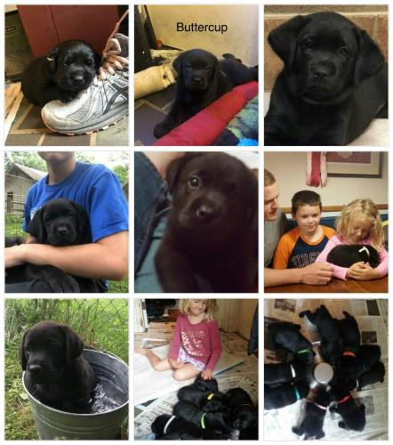 Puppy Collage
